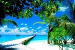 amazing-coco-palm_