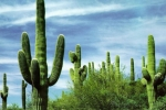 mexico_tours